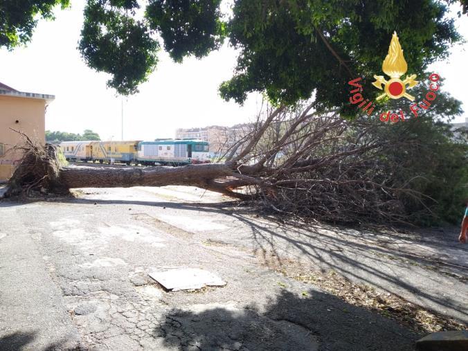 images Vento in città, un albero si abbatte sulla linea ferroviaria  (VIDEO)