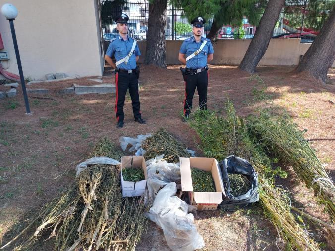 """images Isola Capo Rizzuto. Scoperta una piantagione di marijuana: arrestati 2 """"improvvisati"""" agricoltori"""