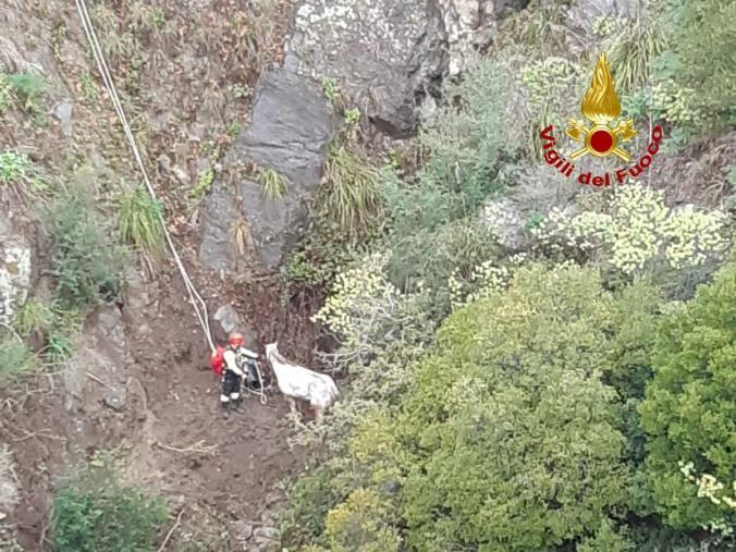 images Sta bene il cavallo scivolato nella scarpata a Stalettì, ma a causa del maltempo il recupero è stato rinviato