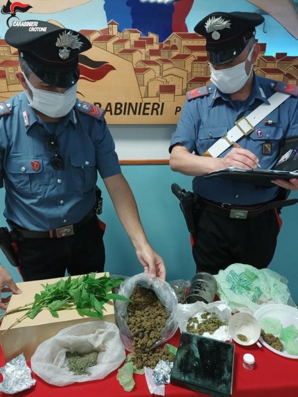 images Petilia Policastro. 300 grammi di marijuana in cucina e 3 piante di canapa indiana in un rustico, 52enne arrestato
