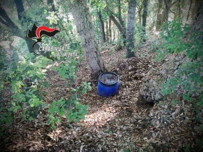 images Lotta alla droga nel Vibonese: a Capistrano trovato un fusto con quasi un chilo di marijuana e a Nicotera sequestrata una piantagione