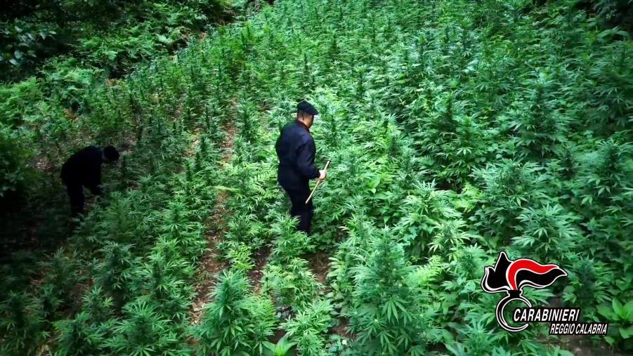 images Cittanova, arrestato un 24enne trovato con 50 grammi di marijuana