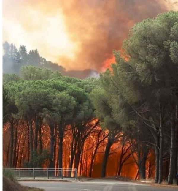 images Pineta di Siano in fiamme: a Contrada San Cono evacuate le abitazioni (LIVE)