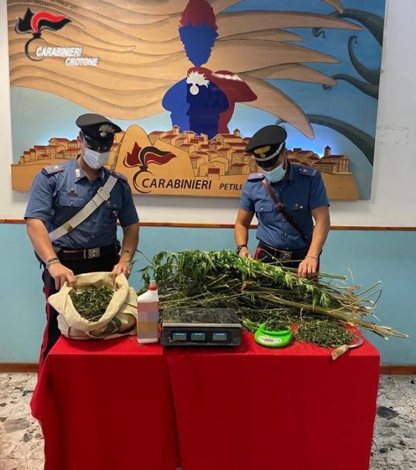 images Petronà, coltivava una piantagione di marijuana: arrestato un 24enne