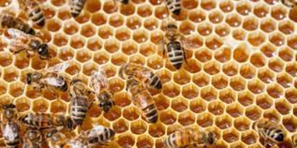 images Davoli, distrutte circa 80 casse di api. Va avanti la raccolta fondi per aiutare l'apicoltore chiaravallese Giuseppe Posca