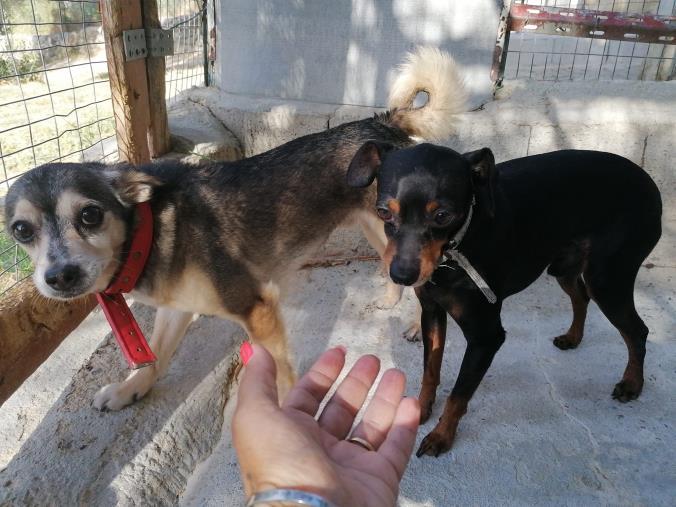 images Incidente mortale a Soverato. Gara di solidarietà per adottare i due cagnolini di Sabrina