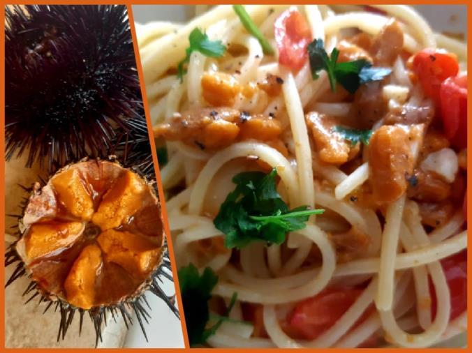"""images Calabria in tavola. Taverniti: """"L'estate è quasi finita, celebriamola con due spaghetti ai ricci di mare"""" (LA RICETTA)"""