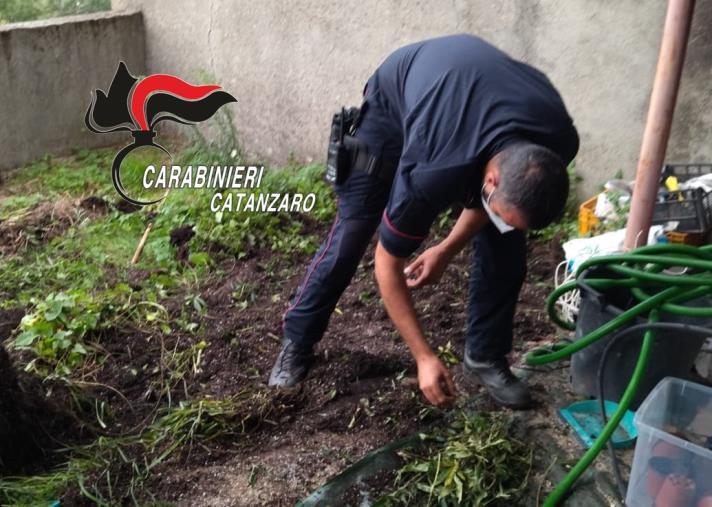 images Vallefiorita, il 'profumo' dal giardino 'tradisce' un 45enne: ai domiciliari per coltivazione e spaccio di marijuana