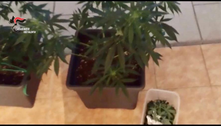 images Vibo Valentia. Carabinieri scoprono coltivazione di Marijuana in un garage: arrestato un giovane