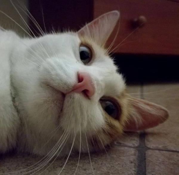 """images Giornata nazionale del gatto. Gianpiero Taverniti: """"Diciamo stop agli abbandoni"""""""