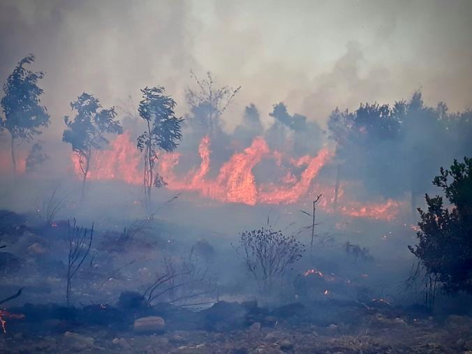 images Emergenza incendi in Calabria. Ancora in fiamme i boschi dell'Aspromonte
