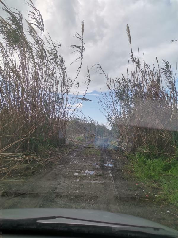 """images Lamezia Terme. Piccioni: """"Intervenire immediatamente per pulire il torrente Cantagalli in zona aeroporto"""""""