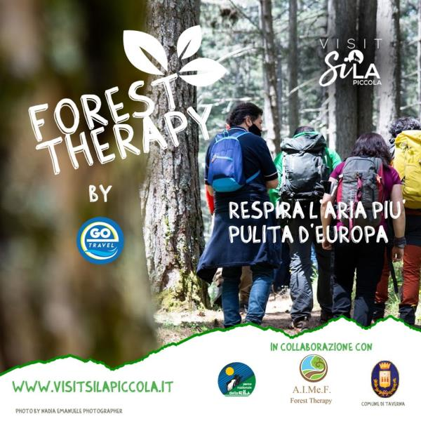 """images Sabato in Sila immersione forestale con l'iniziativa """"Forest therapy by ego travel"""""""