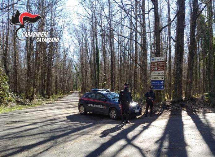 images Furto di legname a Girifalco: arrestato un 46enne
