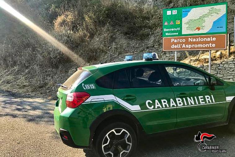images A caccia illegalmente all'interno del Parco nazionale d'Aspromonte, denunciato 35enne