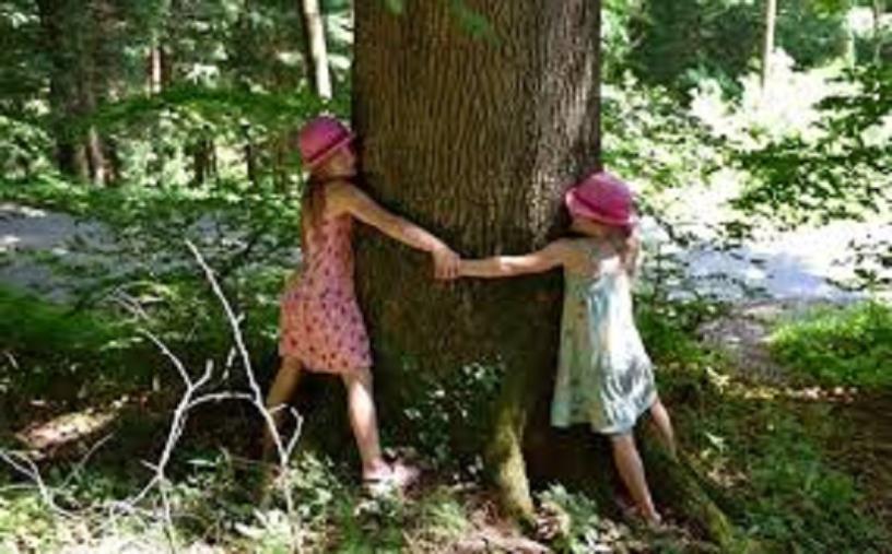 """Lamezia Terme. Anche a Savutano saranno piantati gli """"Alberi per il futuro"""""""