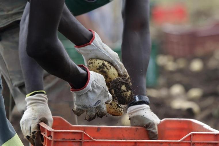 images Migranti e lavoro, flop della Calabria