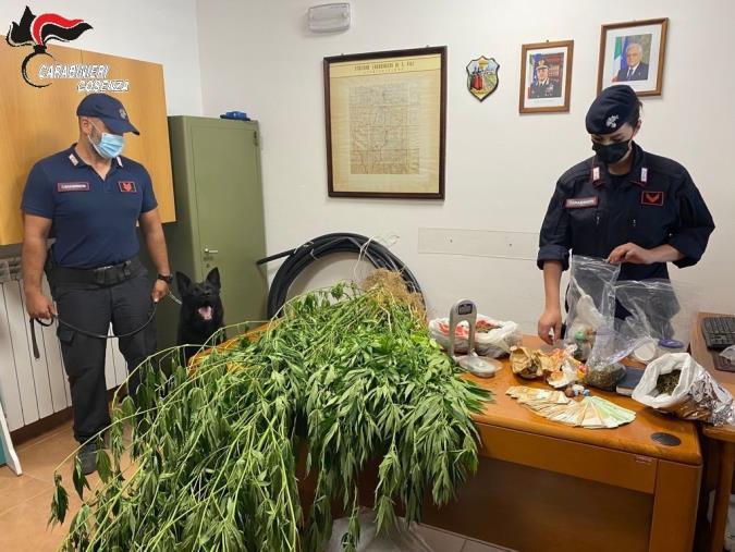 images San Vincenzo La Costa. I carabinieri scoprono coltivazione di marijuana: arrestato un 50enne
