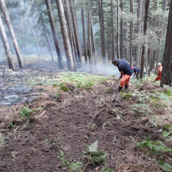 """images """"Calabria Verde"""", l'importanza di realizzare fasce parafuoco prima e durante gli incendi"""