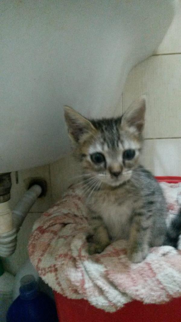 images Maida, smarrito un gattino di tre mesi