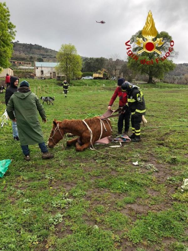 images I vigili del fuoco salvano quattro cavalli nel Reggino