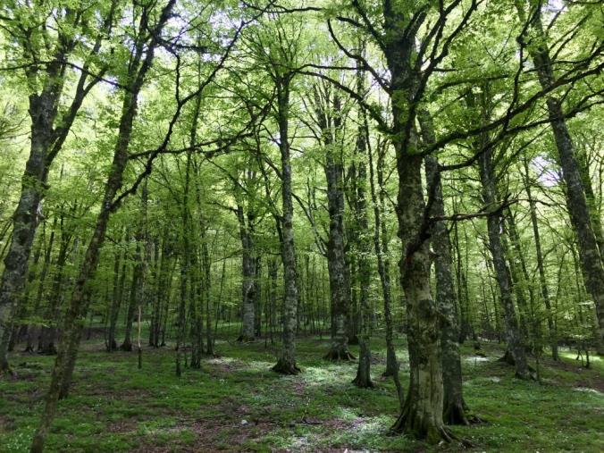 """images """"Forestazione 2.0. Proposte, sfide e opportunità per il benessere ambientale e sociale della Calabria"""". Il convegno di Fai Cisl Calabria"""