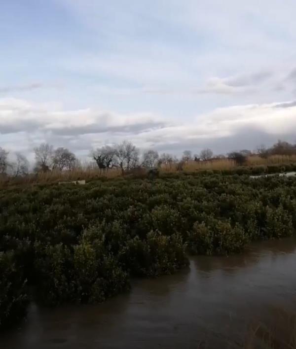 images Corigliano-Rossano. Il fiume Crati rompe gli argini: allagati gli agrumeti