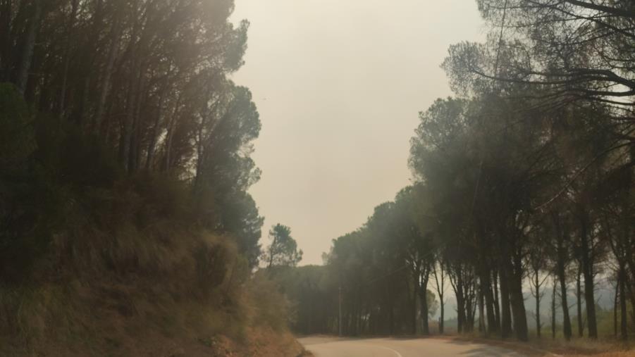 images Catanzaro. Roghi, fumo e fuliggine in molte aree della città (FOTO e VIDEO)