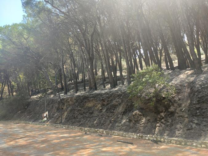 images Incendio Pineta di Siano, ingenti danni. I vigili del fuoco alle prese con alberi pericolanti