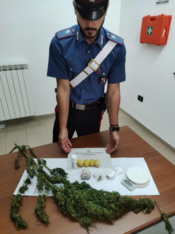 images Coltivava marijuana in casa, denunciato 49enne di Petronà