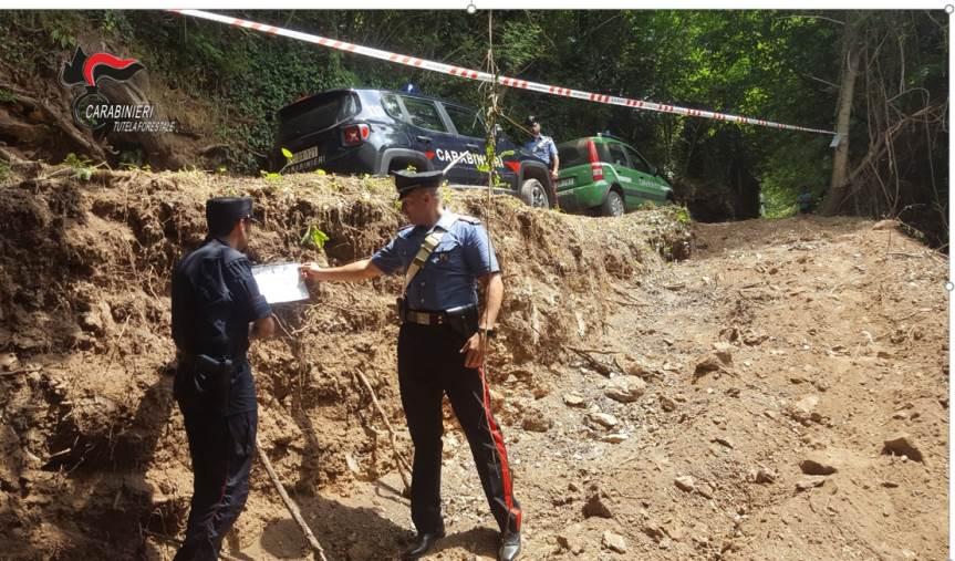 images Platania, distrugge un bosco per fare una strada: denunciato