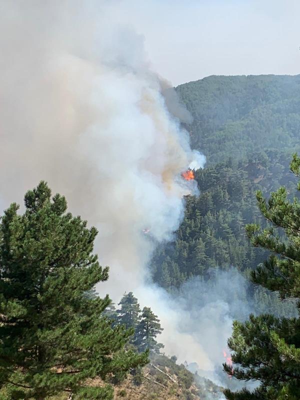 "images Incendi San Luca, Spirlì: ""Attivi mezzi aerei e di terra"""
