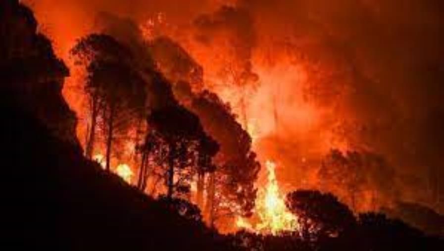 images Incendi nel reggino, il resoconto del Comando provinciale dei vigili del fuoco