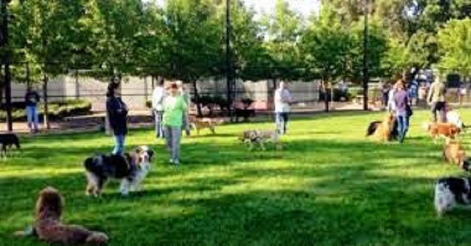 images Al Parco della Biodiversità arriva un'area dedicata ai cani