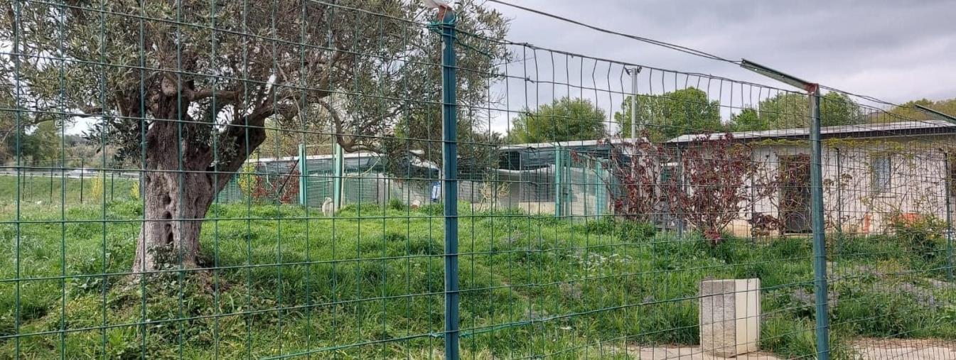 """images Marcellinara si doterà della prima Oasi canina parco rifugio della provincia. Il sindaco: """"Vicini alla meta"""""""