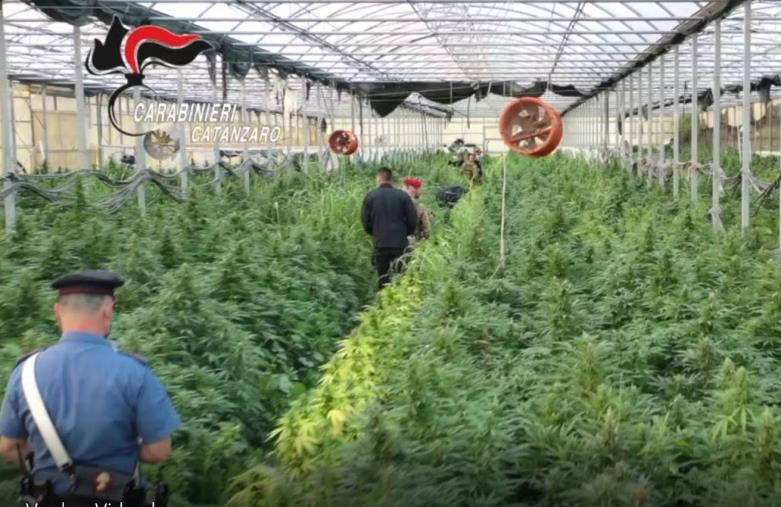 """images Sellia Marina. Spaccio di marijuana, operazione """"Oro verde"""": 5 condanne (I NOMI)"""