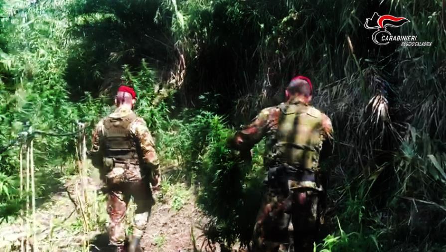 images Lotta allo spaccio di marijuana: arresti e sequestri nella Locride