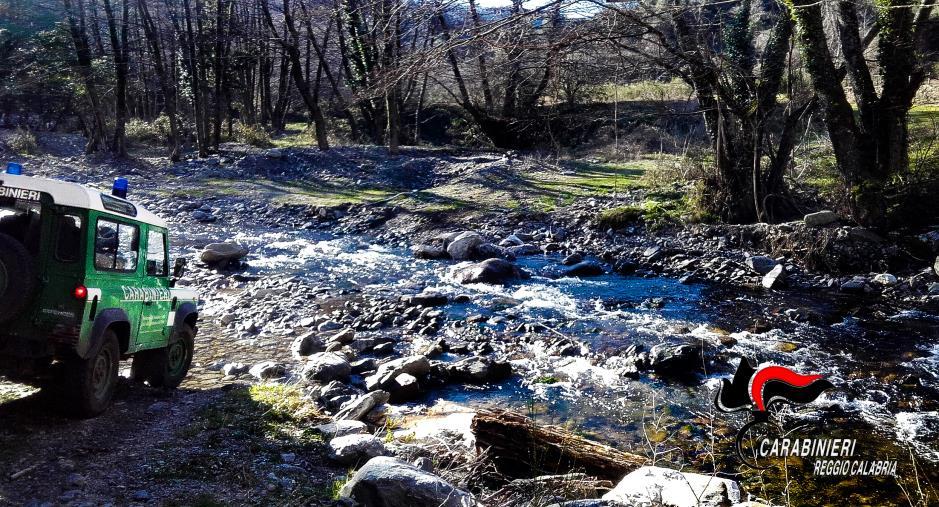 Sorpresi a trafugare legna nel Parco nazionale d'Aspromonte: due denunce