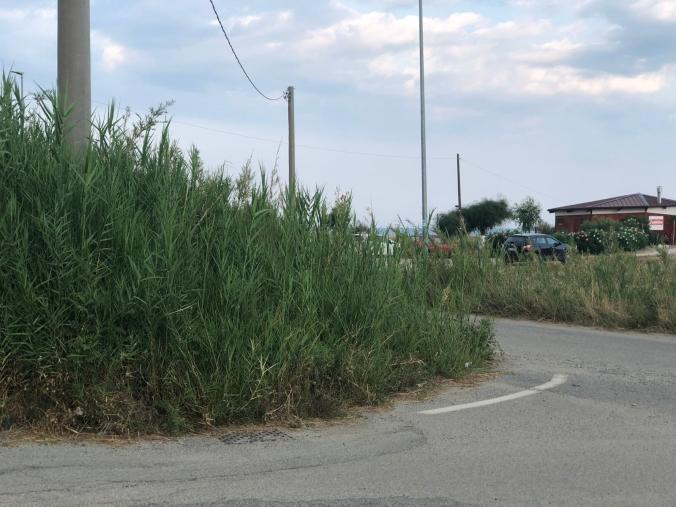 images Località Ruggiero, dove il degrado mette in fuga i turisti. La denuncia dell'imprenditore Faragò