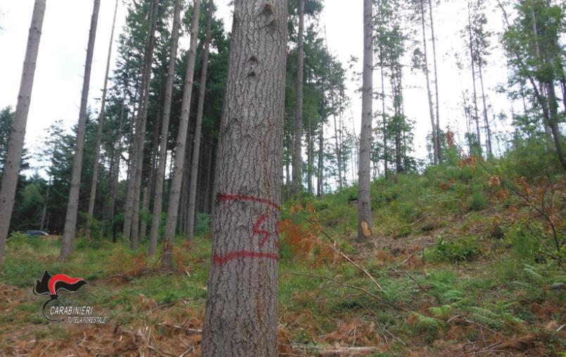 images Motta S.Lucia, taglio abusivo su quasi sei ettari di bosco: una denuncia