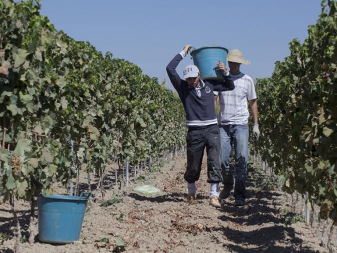 """images Lavoro. Coldiretti Calabria: """"Con un balzo del 17,4% crescono le ore lavorate in agricoltura"""""""