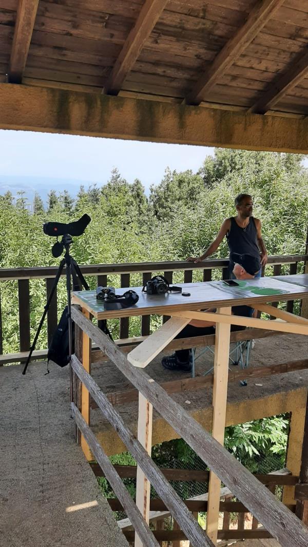 images Girifalco. Iniziativa di Legambiente all'Osservatorio ornitologico sulla migrazione post riproduttiva e autunnale del falco pecchiaiolo