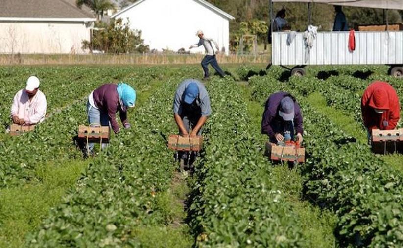 images Catanzaro. Firmato il Contratto Collettivo Provinciale del Lavoro per gli operai agricoli e florovivaisti