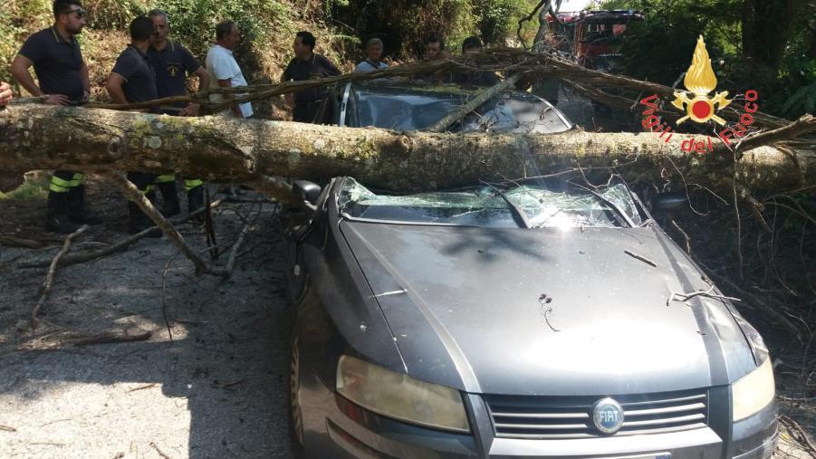 images Cade un albero in strada di Lamezia: presa in pieno un auto