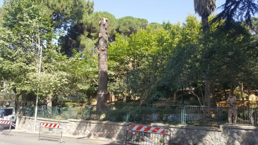 """images I Quartieri: """"Cz Lido e l'albero suicida sono la mediocrità della politica di Palazzo"""""""