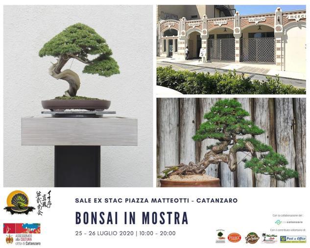 """images L'Istituto Agrario di Catanzaro sarà presente alla XI Mostra """"Arte Bonsai e Suiseki"""" all'ex Stac"""