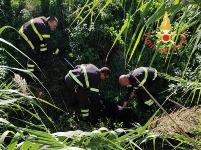 images Lamezia Terme. Un cane cade in un canalone per irrigazione: salvato dai vigili del fuoco