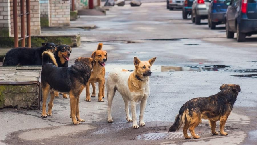 "images Lotta al randagismo, al via in Calabria il progetto ""Save the dogs"""