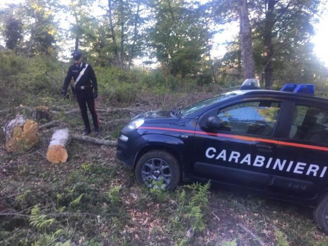 images Operazione Fangorn, chiuse le indagini a carico di 15 persone: per la Procura di Castrovillari gestivano il taglio abusivo di alberi anche secolari