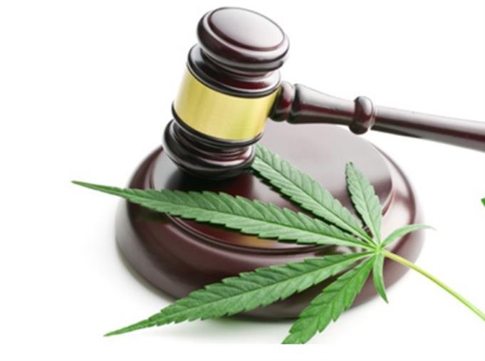 images Pizzo. Marijuana nel vivaio Santacroce: assolto Andrea Antonio per non avere commesso il fatto